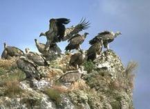 Ligue pour la protection des oiseaux - Peyreleau
