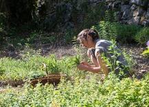 Dumas Sylvie - Plantes aromatiques - Le Rozier