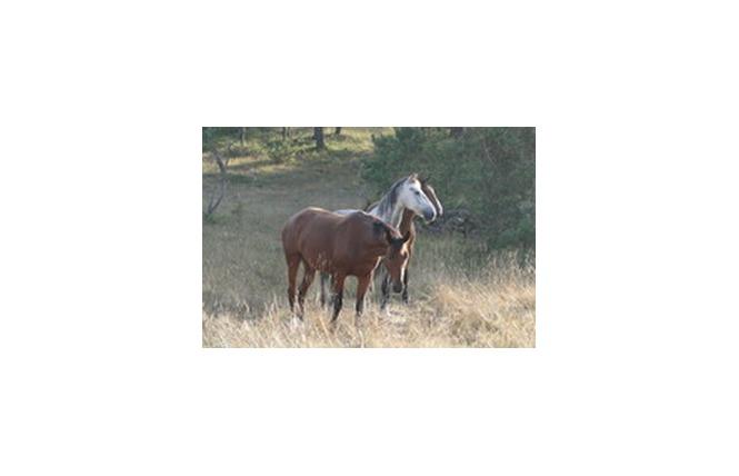 Centre Equestre Le Sonnac 9 - La Cresse