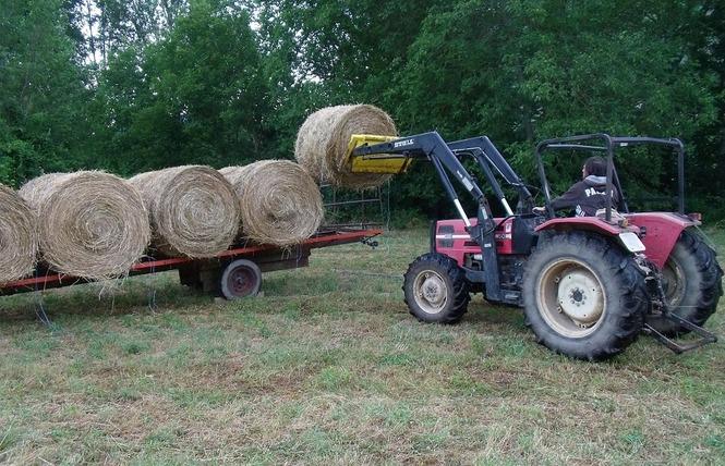 Ferme de Pinet, visite d'un élevage de brebis en agroécologie 10 - La Cresse