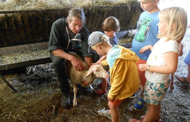 Ferme de Pinet, visite d'un élevage de brebis en agroécologie 5 - La Cresse
