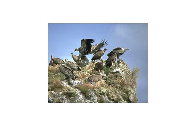 Ligue pour la protection des oiseaux 1 - Peyreleau