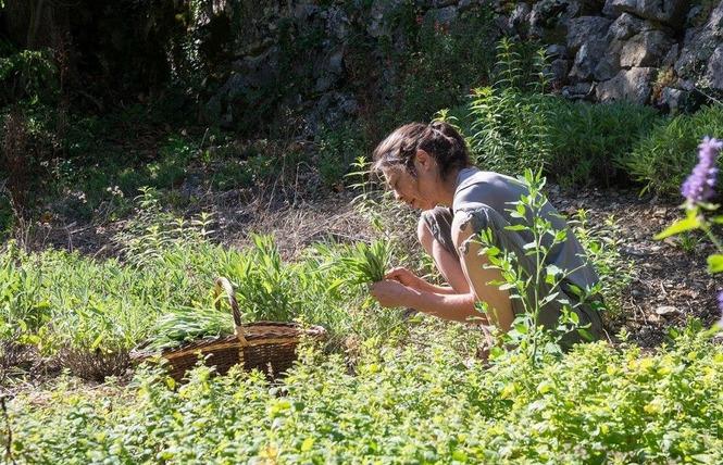 Dumas Sylvie - Plantes aromatiques 1 - Le Rozier