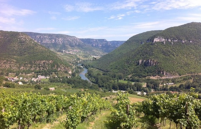 Domaine du Vieux Noyer 7 - Rivière-sur-Tarn