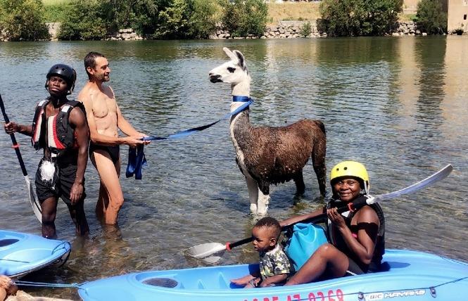 Lamas du Soleil 10 - Millau