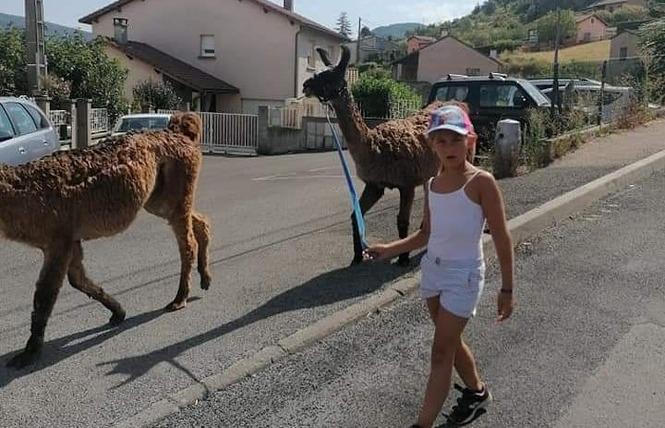 Lamas du Soleil 7 - Millau